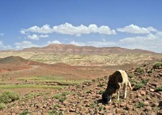 Marokko-56