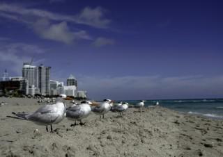 Travel Florida-3